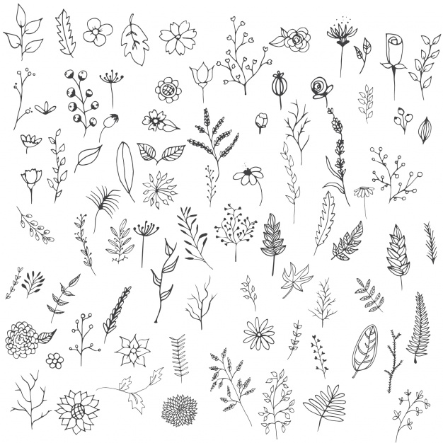 hand-drawn-flowers-collection_1117-158